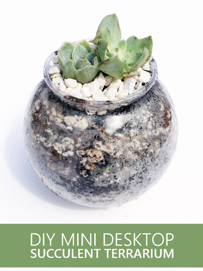 DIY Mini Desktop Succulent Terrarium