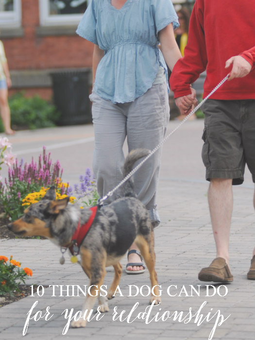 10 Things a Dog Can Do for Your Relationship