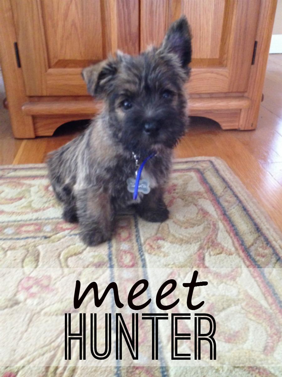 Meet Hunter