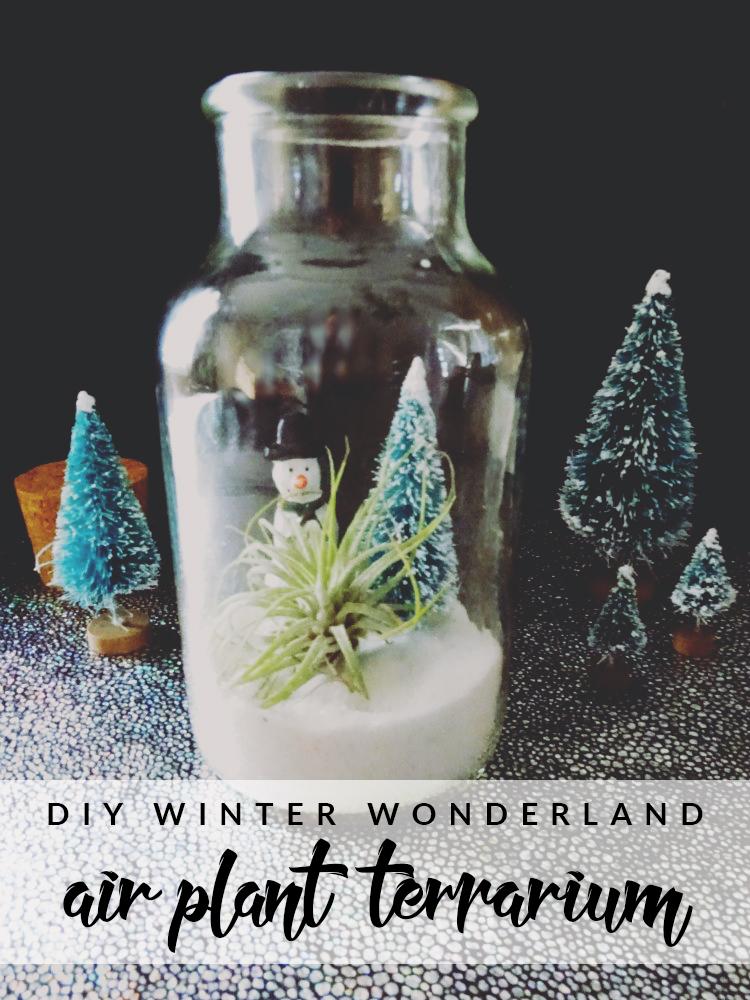 Winter-Wonderland-Air-Plant-Terrarium