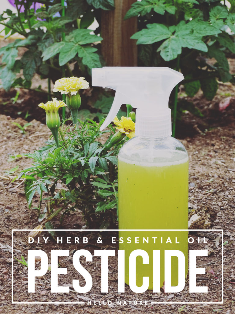 DIY Herb & Essential Oil Pesticide