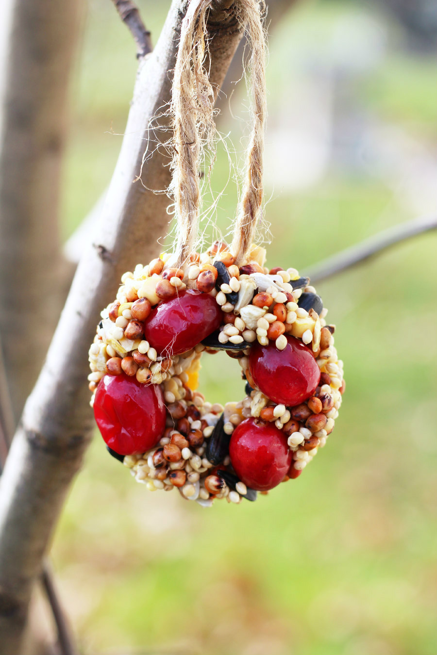 birdseed christmas wreaths